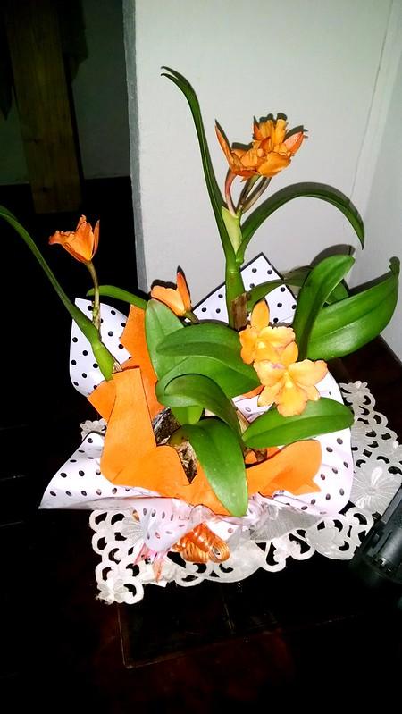 Invierno Naranja, Orquídea.