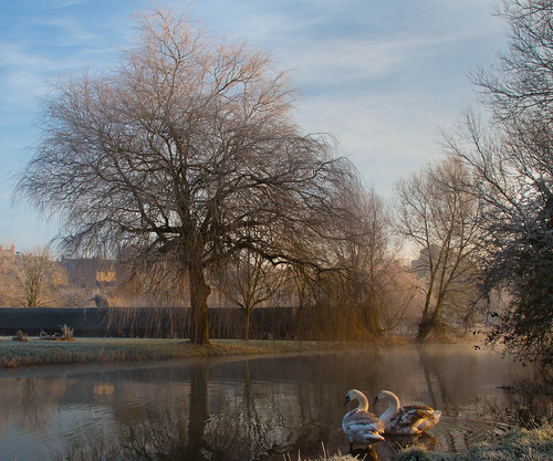 morning light sun mist cold tree misty sunrise river frost swans sunlit riverbank cygnets malmesbury