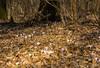 2015-02-19- crochi al boscone LR -2278