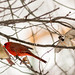 Cardinals & Sparrows by Rick Smotherman