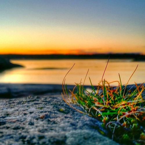 blue light sunset sea sky reflection beach nature water grass silhouette yellow norway landscape rocks straws tjøme bekkevika