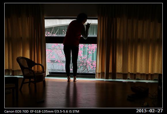 2015_0227Cherry_Blossom3