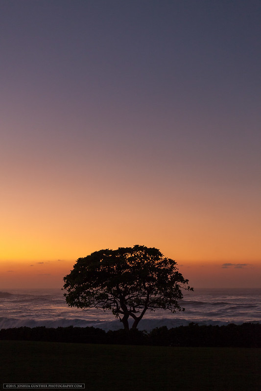 Sunset Tree - Oahu Hawaii