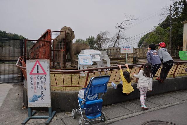 150320家族で日本平動物園 71 1