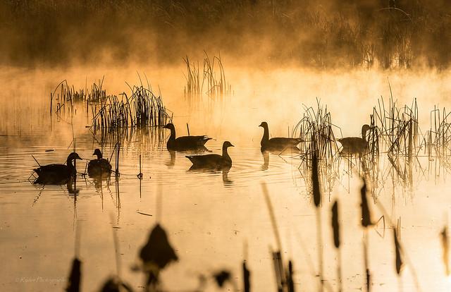 Waterfowl Zen