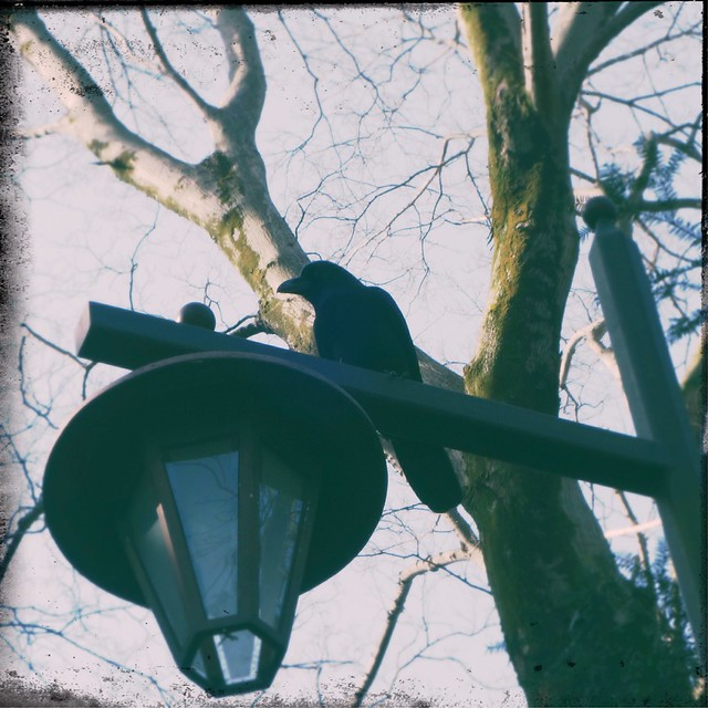 Crow sitting on a street light