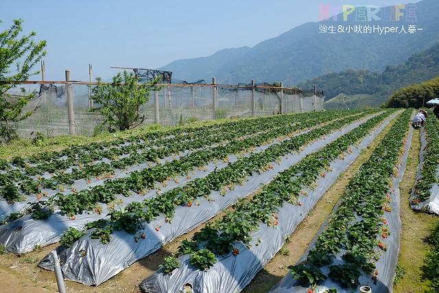 劉正男高冷草莓園  (23)