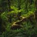 Forest Haven by Alex Noriega.
