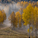 Manti-La Sal National Forest by fred h
