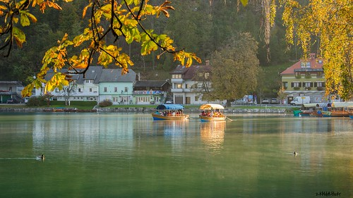 park morning autumn trees lake color reflection tree green bird fall tourism nature water animal yellow forest season landscape boat duck europe view scenic tranquility bank landmark slovenia shore bled vacations centraleurope lakebled gorenjska triglavnationalpark pletna travellocations