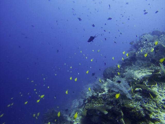 Tanjung Menangis | Moyo Island