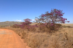 Red sand in Parque nacional da Serra da Canastra