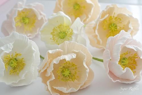 Sugar Flowers- Icelandic Poppies