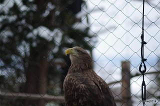 20141228 Asahiyama Zoo