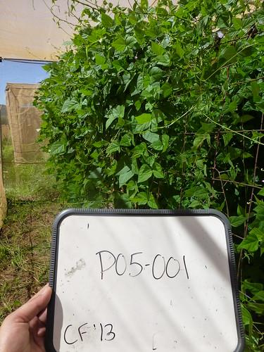 P05-001 CF13 Pl1