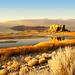 """Black Rock bathed in Golden sunset light by Scott Stringham """"Rustling Leaf Design"""""""