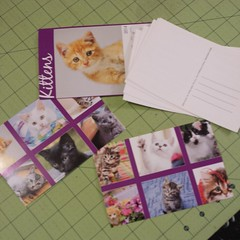 Recycled a 2014 #kitten calendar into postcards to send my girl while she's away at school. #geekmom