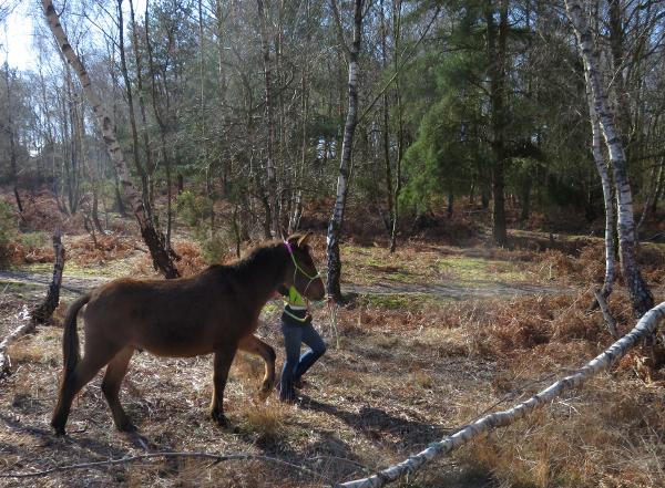 Woodland Mule