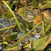 least bittern by Christian Hunold