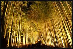 日本京都-嵐山夜燈.13