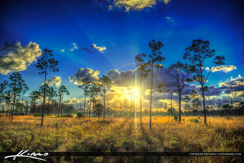 forest florida jupiter palmbeachcounty photomatixpro hdrphotography floridalandscape jupiterfarms pinegladesnaturalarea captainkimo