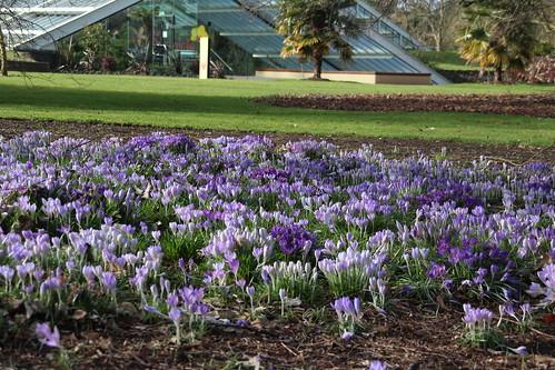 Kew Mar 1 2015