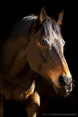 Images of horses on their own and with their owners. Black and white, and colour photos.