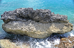 Diploria fossil brain coral on Devil's Point Hardground (Cockburn Town Member, Grotto Beach Formation, Upper Pleistocene, ~120-123 ka; Cockburn Town Fossil Reef, San Salvador Island, Bahamas) 3