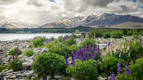 More New Zealand
