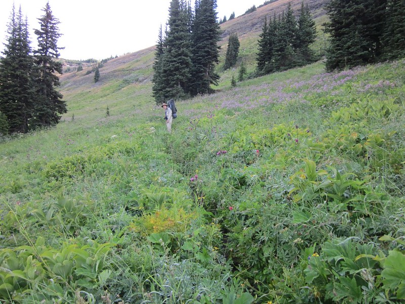 Me, slogging through the wet flowers in the meadow north of Harts Pass.