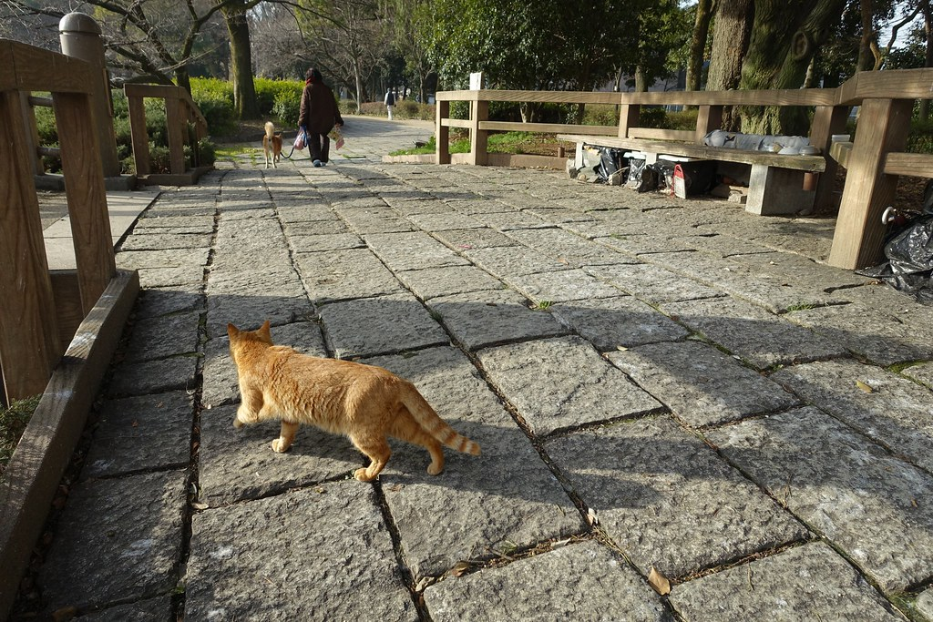A cat in Mejo park 2015/02 No.5(One scene of commuting 2015/02 No.10).