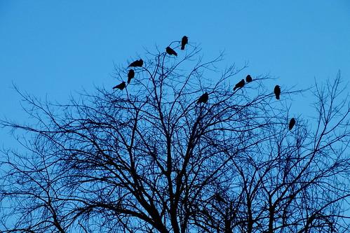 birds in tree tops