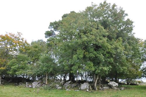 Thomastown Rath