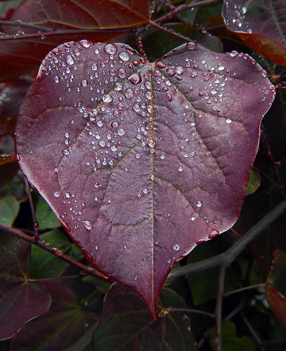 Raindrop-studded Jewel-tone Leaves