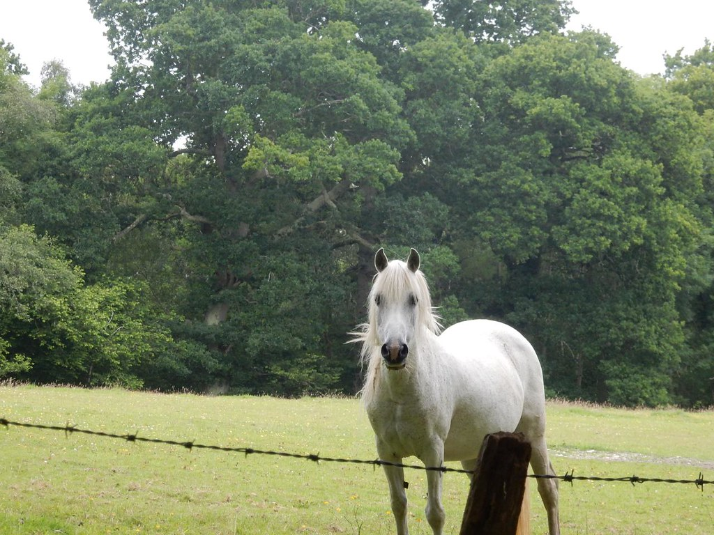 White horse Brockenhurst to Lymington