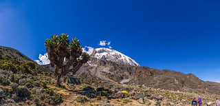 Kilimandjaro - Barranco Camp