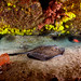 Stingray & Lobsters