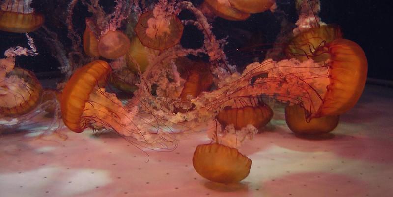 Aquarium of the Pacific, part 2