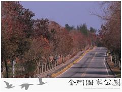 烏桕(高陽路)