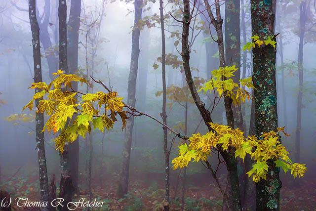 Autumn Fog Monongahela National Forest