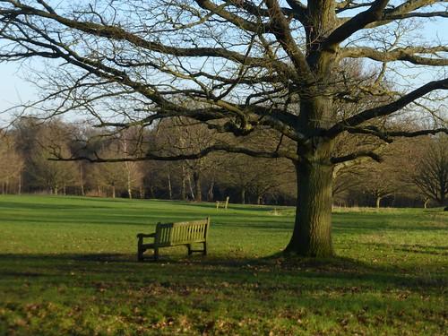 Monken Hadley Common (option d)