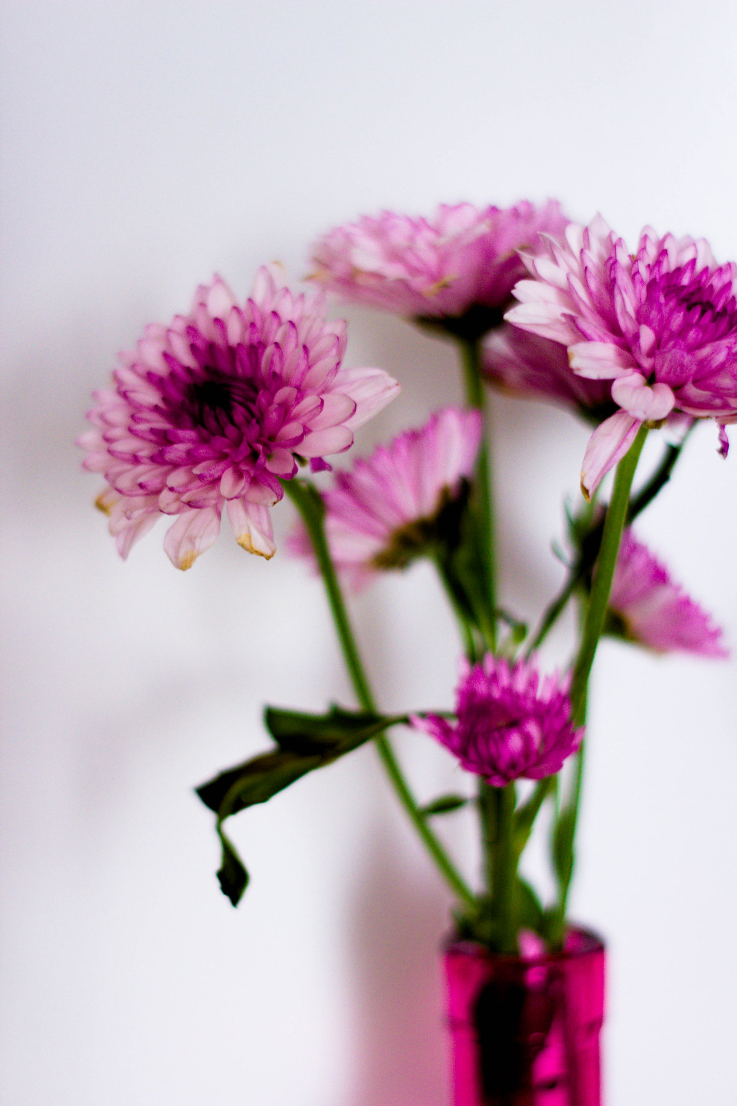 FlowerExperiment-Day3-IMG_2726