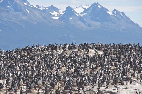 【写真】世界一周 : ビーグル水道(ペンギン生息地まで)