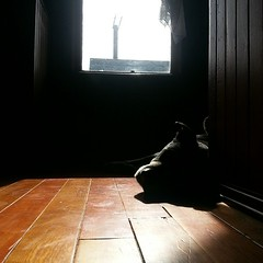 Old dog's been here resting. (And also starring in my poem today)  ~~~~~~~~~~~~~~~~~ http://poems.nedtobin.com