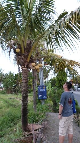 Bali-3-062
