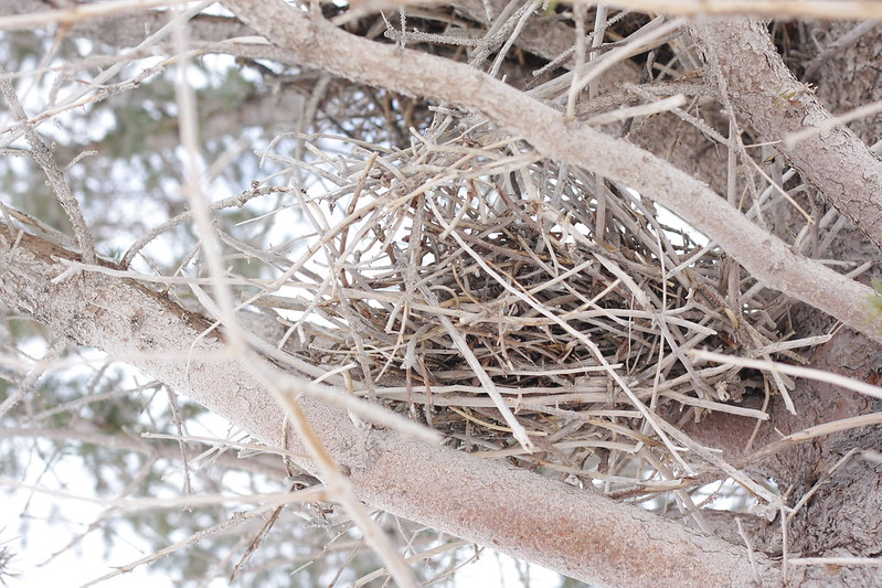 an empty bird's nest