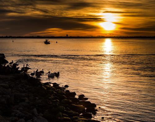 sky sun color pelicans water birds boats landscapes fishing nikon seascapes florida sunsets impressions thegreatoutdoors d800 floridawildlife sebastianinlet riverscapes nikond800 littletinperson