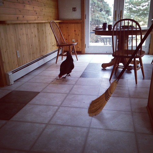 Nug, helping me clean the kitchen. #farmlife