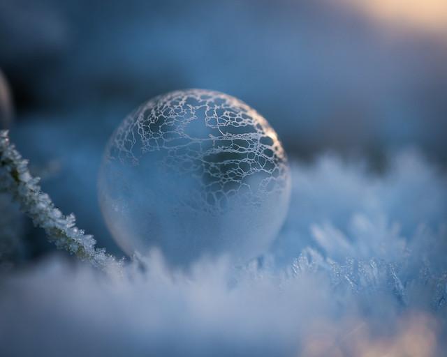 Anniison - Frozen Decay