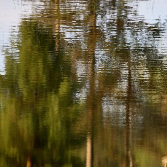 Reflet d'arbres...!!!